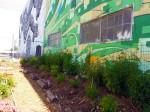Freespace - Back Wall Graphics w Garden